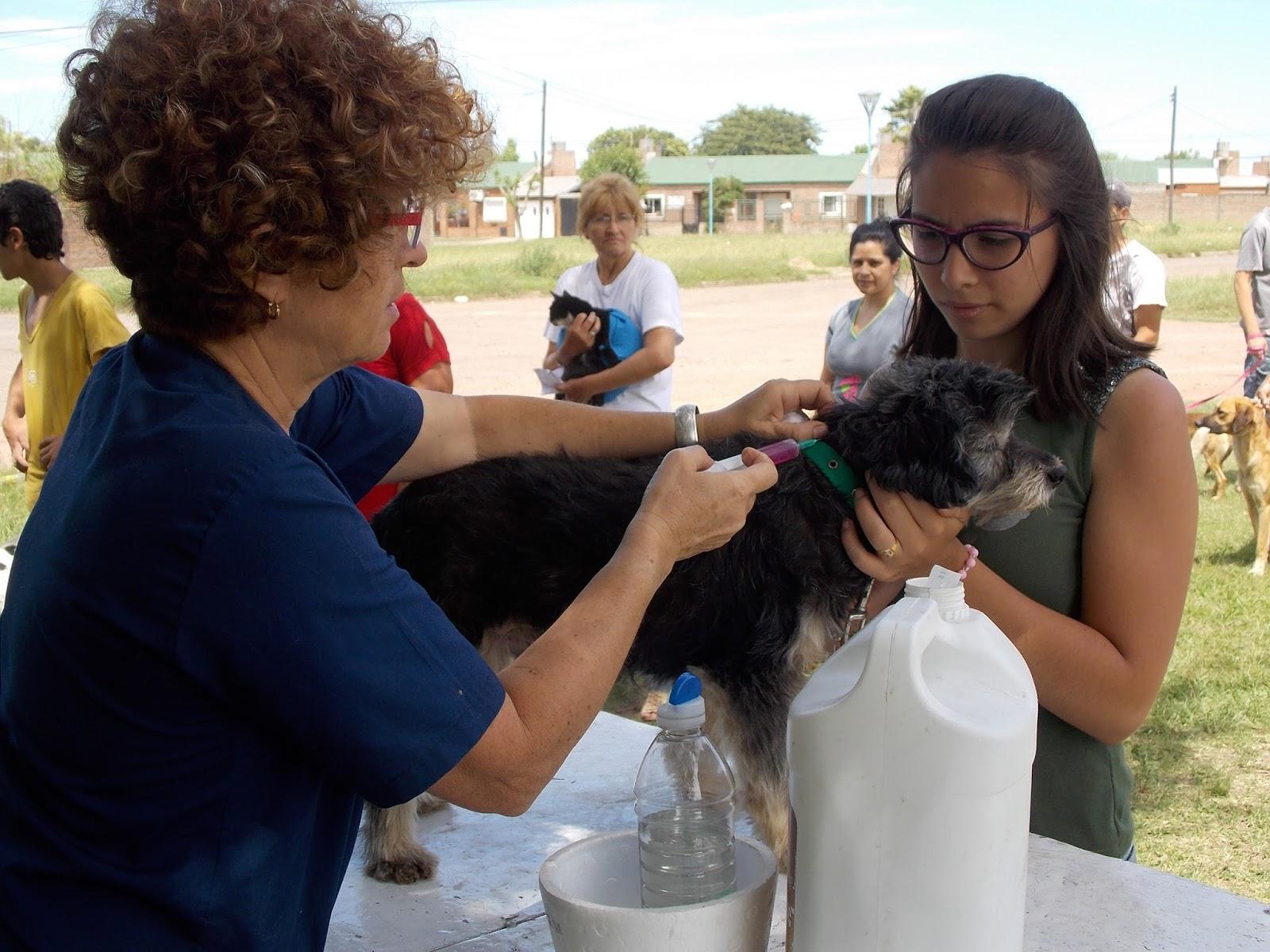En octubre, campaña de vacunación municipal de mascotas